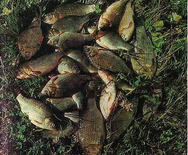 морды ловить на озере